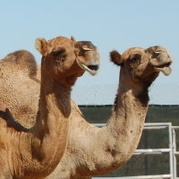 Wild World Zoo and Camel Farm Yuma AZ